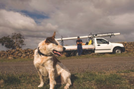 Tradie with Dog in Country